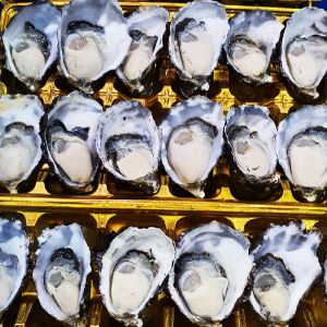 Oysters - Bay of Fires